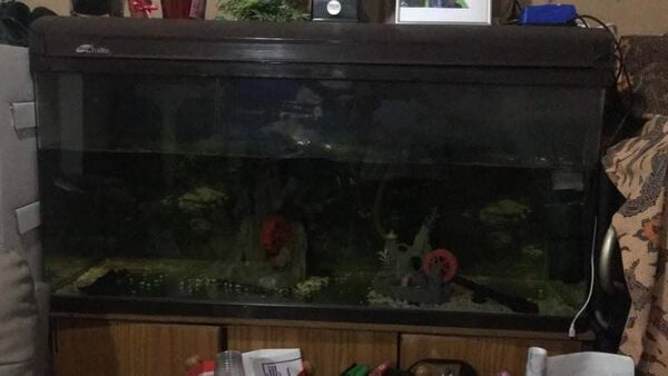 70 Gallon Aquarium For Sale