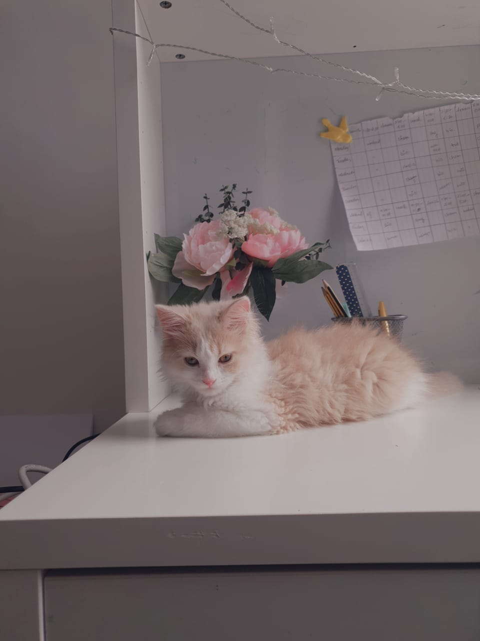 Cute kitten 4.5 months for sale