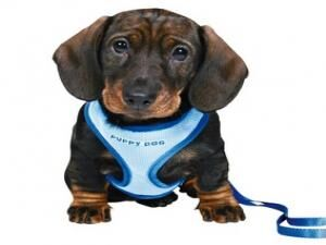 Trixie Puppy Soft Harness with Leash