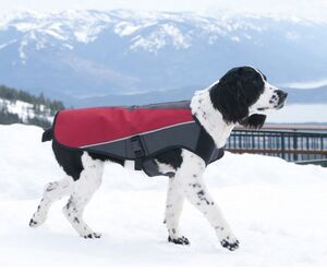 EzyDog Element Jacket Wind and Shower Proof -  Dogs product