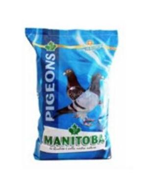 Manitoba Pigeon