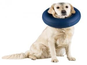 Protective Collar -  Dogs product