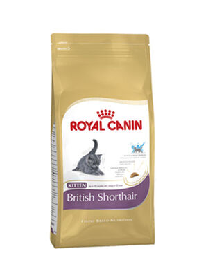 Royal Canin British Short Hair Kitten 10kg -  Cats product