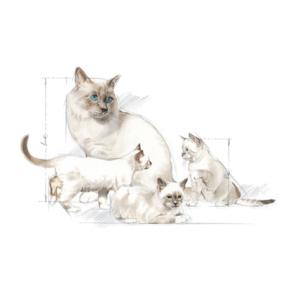 300gm Royal Canin Babycat Milk -  Cats product