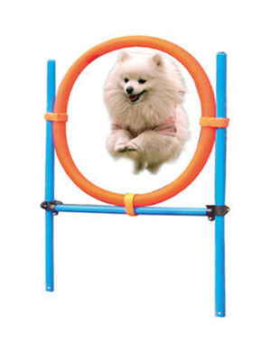Speedy pet Dog agility training