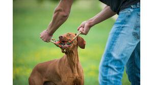 Majordog Tugger -  Dogs product