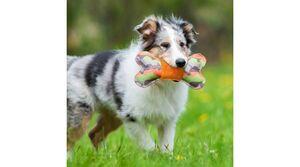 Majordog Bone with Plush -  Dogs product