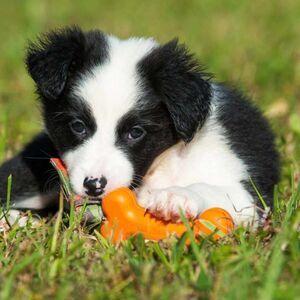 Majordog Bone Dummy -  Dogs product