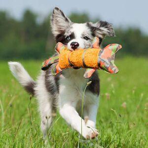 Majordog Tiger -  Dogs product