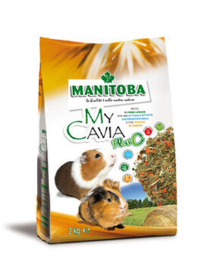 Manitoba My Cavia Plus C