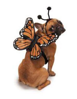 PetEdge ZZ Butterfly Glow Harness Costume Medium