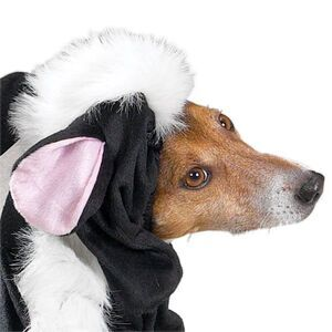 PetEdge CC Lil' Stinker Costume Small -  Dogs product