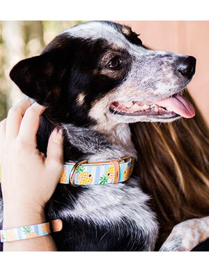Pineapple Print Dog Collar And Bracelet Large -  Dogs product