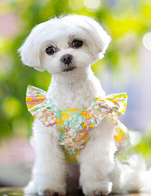 Floral Summer Dress Medium - Cats Apparel & Accessories product