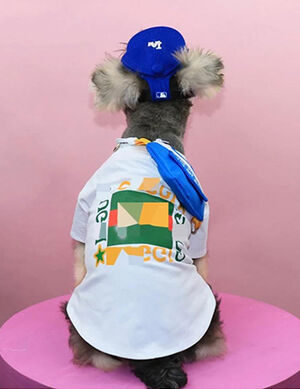 Gucci T-Shirt White Small -  Dogs product
