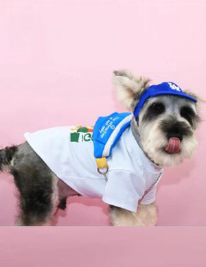 Gucci T-Shirt White Medium -  Dogs product