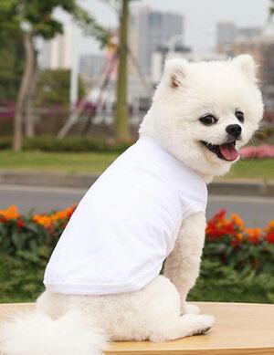 Plain White T- Shirt Medium