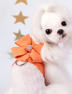Bow Harness Orange Small -  Dogs product