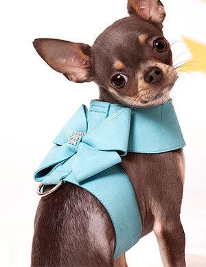 Bow Harness Aqua Blue Small -  Dogs product