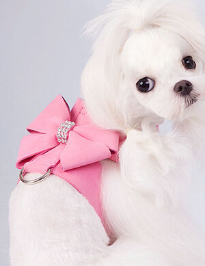 Bow Harness Pink Small -  Dogs product