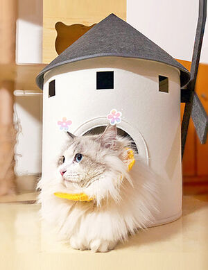 Exclusive Pet House White -  Dogs product