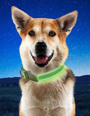 Niteize Nite Dog Rechargeable LED Collar Lime Large