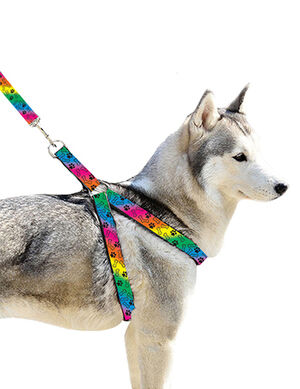 Pet Craft Rainbow Leash & Harness Medium