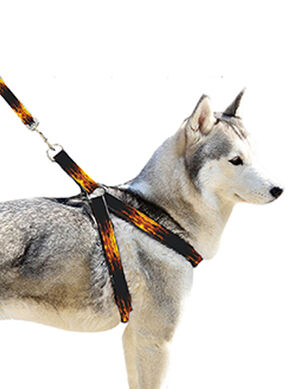 Pet Craft Fire Design Leash & Harness Medium