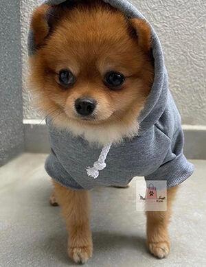 Pet Grey Hoodie Medium -  Dogs product